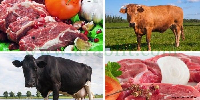الطعام والمناخ .. علاقة وطيدة بين الغذاء والطقس