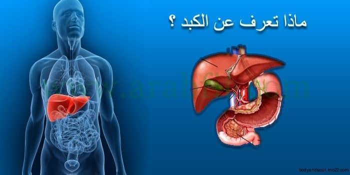 ماذا تعرف عن الكبد والأمراض التي تصيب الكبد وطرق الوقاية منها ؟