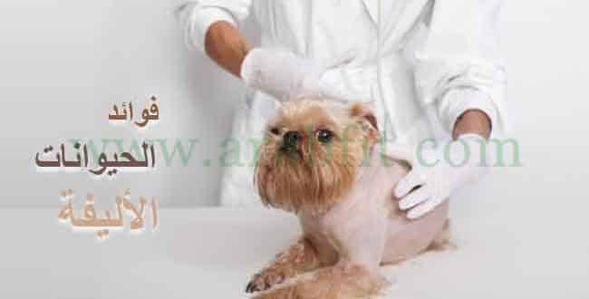 فوائد الحيوانات الأليفة للصحة النفسية والجسدية